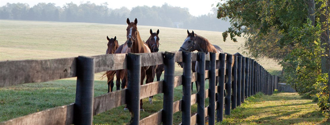 Lexington Kentucky Horses